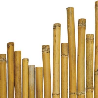 Canna in bambù, lunghezza 3 metri