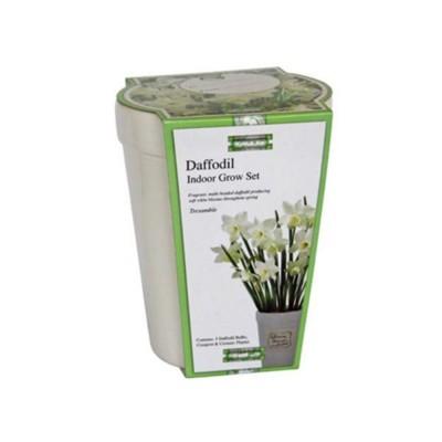 """Kit Coltivazione Fiori di Narciso """"Tresamble"""" di colore Bianco, con vaso in ceramica, terriccio e bulbi"""