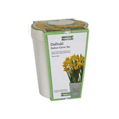 """Kit Coltivazione Fiori di Narciso """"Tete a Tete"""" di colore Giallo, con vaso in ceramica, terriccio e bulbi"""
