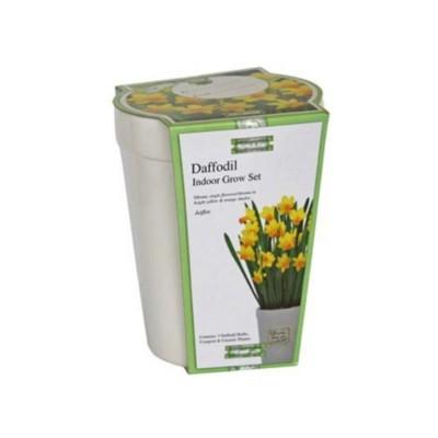 """Kit Coltivazione Fiori di Narciso """"Jetfire"""" di colore Giallo, con vaso in ceramica, terriccio e bulbi"""