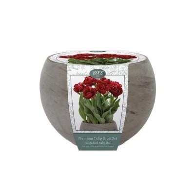 """Kit Coltivazione Fiori di Tulipani """"Baby Doll"""" di colore Rosso, con vaso in basalto, terriccio e bulbi"""