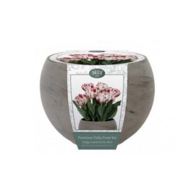 """Kit Coltivazione Fiori di Tulipani """"Carnival"""" di colore Bianco con striature rosse, con vaso in basalto, terriccio e bulbi"""