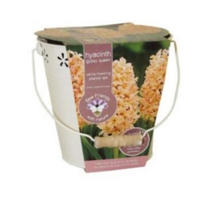 """Kit Coltivazione Fiori di Giacinto """"Gipsy Queen"""" di colore Arancione, con vaso in metallo, terriccio e bulbi"""