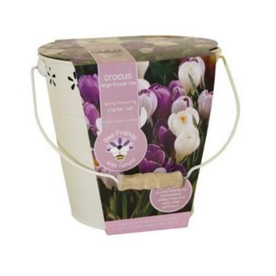 Kit Coltivazione Fiori di Crochi di colori misti, con vaso in metallo, terriccio e bulbi