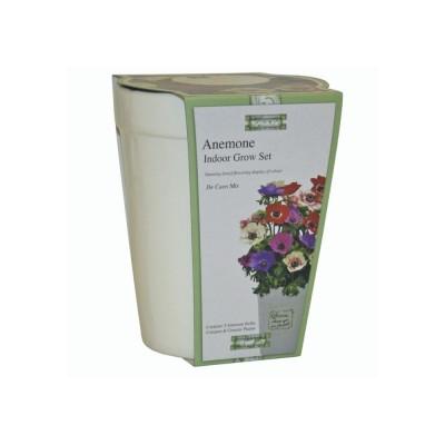 """Kit Coltivazione Fiori di Anemoni """"De Caen"""" misti, con vaso in ceramica, terriccio e semi"""