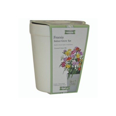 Kit Coltivazione Fiori di Fresia con colori misti, con vaso in ceramica, terriccio e semi