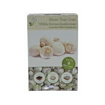Kit Coltivazione Funghi Champignon commestibili, con miniserra, micelio e compost
