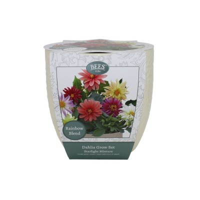 """Kit Coltivazione Fiori di Dalia """"Starlight"""", con vaso in ceramica, terriccio e semi"""