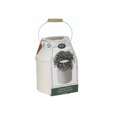 Kit Coltivazione Fiori di Lobelia, con vaso in metallo, terriccio e semi