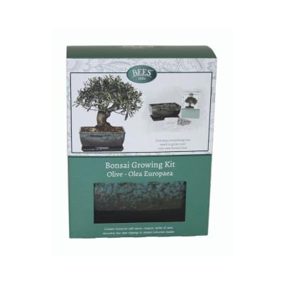 """Kit Coltivazione Bonsai """"Ulivo"""", con vaso, terriccio, scaglie di ardesia e semi"""