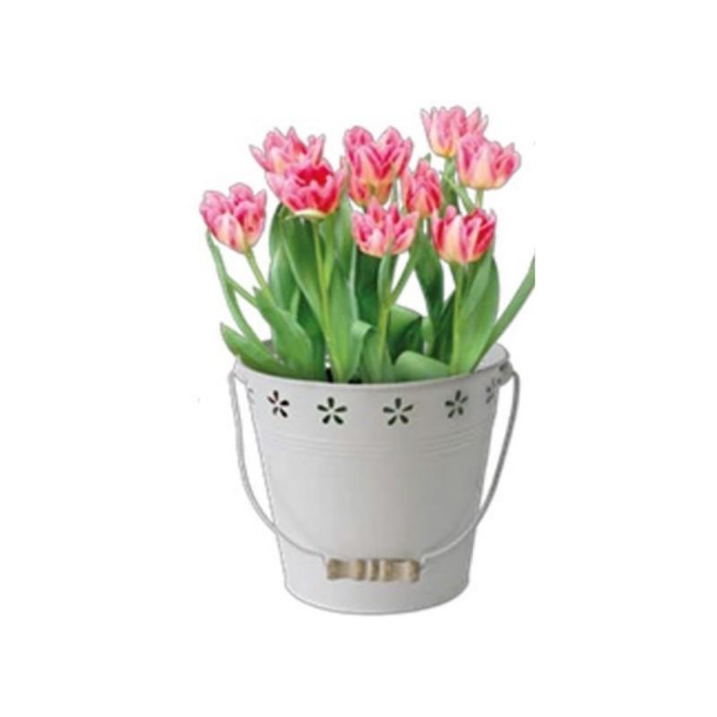 Bulbi In Vaso Di Vetro.Kit Coltivazione Fiori Di Tulipani Blossom Di Colore Pesca